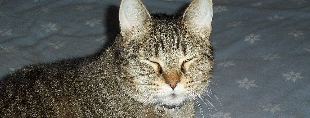 Cat Rental Near Me >> Amazing Grace – I Once Was Lost But Now Am Found   Communities Altering The Strays